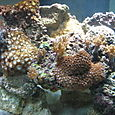 Our reef