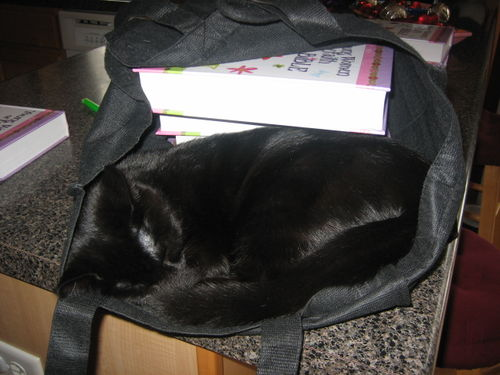Cat in the Bible Bag